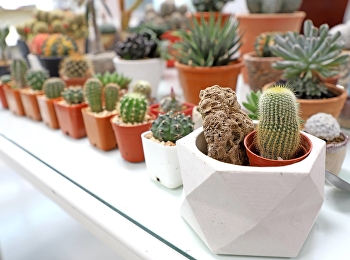 cactus container garden