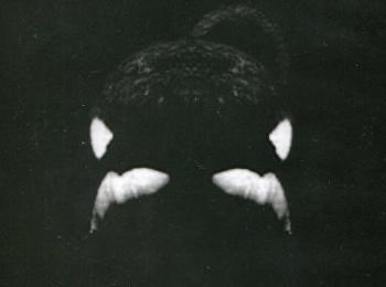 แบล็คฟิช วาฬเพชฌฆาต