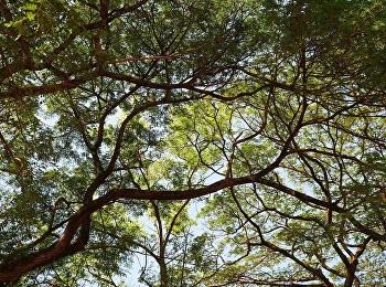 DNA ต้นไม้ : ไขคดีถางป่า