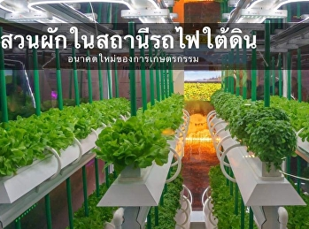 Subway Vegetable Garden: The Future of Farmers